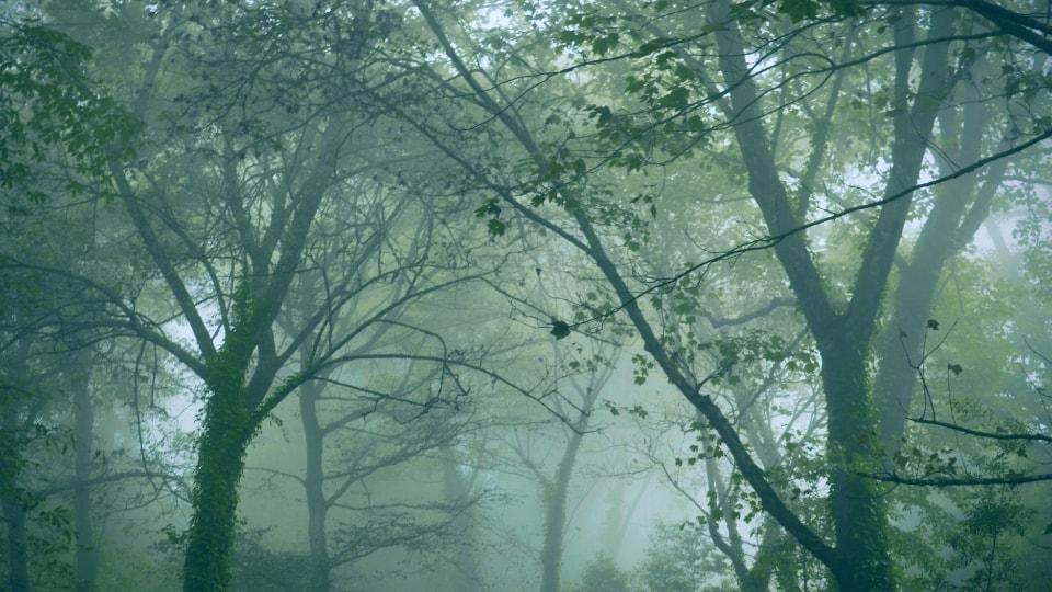 10 Gezondheidsvoordelen van Shinrin-Yoku, bosbaden